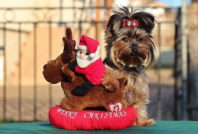 7 Christmas Gifts For Dogs Tips You Need To Learn Now