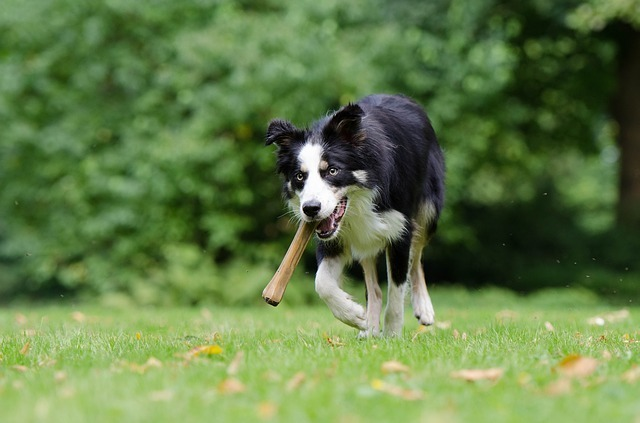 best bones for dogs