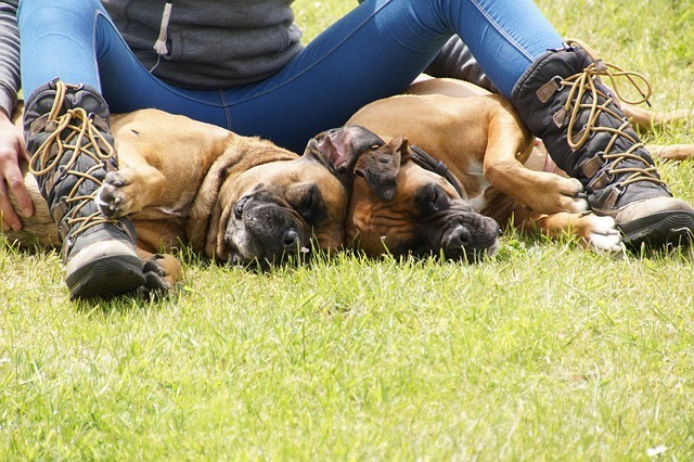 Best Dog Boots: Protect their paws During Winters