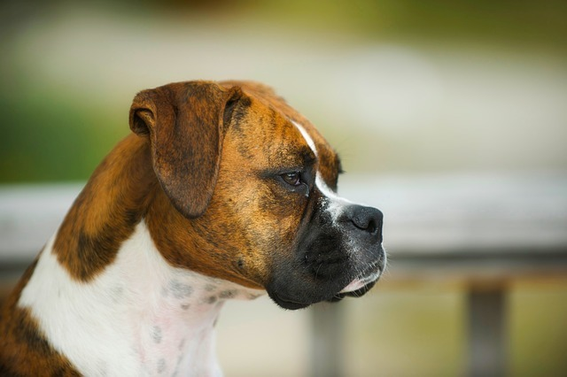 A Detailed Analysis of Best Tear Stain Remover for Dogs