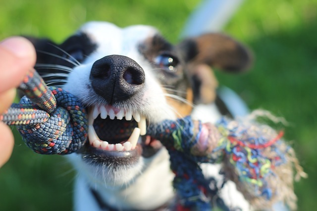 Show Your Love: Pick The Best Toothpaste For Dogs