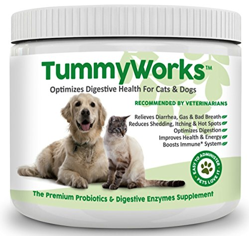 Best Food For Dog With Yeast Problems