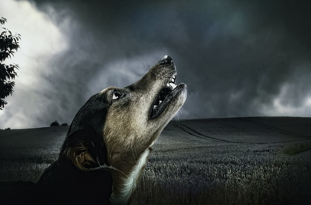 The Real Reason Behind Why Do Dogs Howl At Sirens
