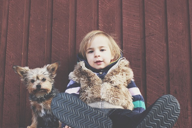 If You Want a Pet |Here is the Best Small Dog For Kids