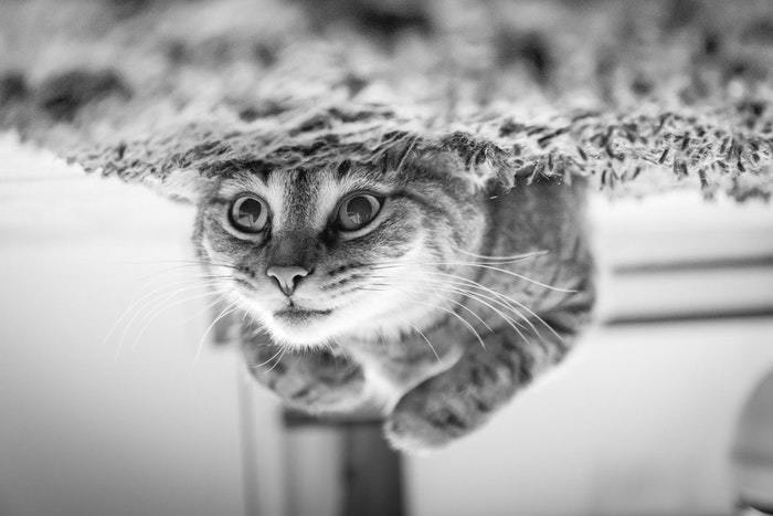Best Camera for Pet Photography