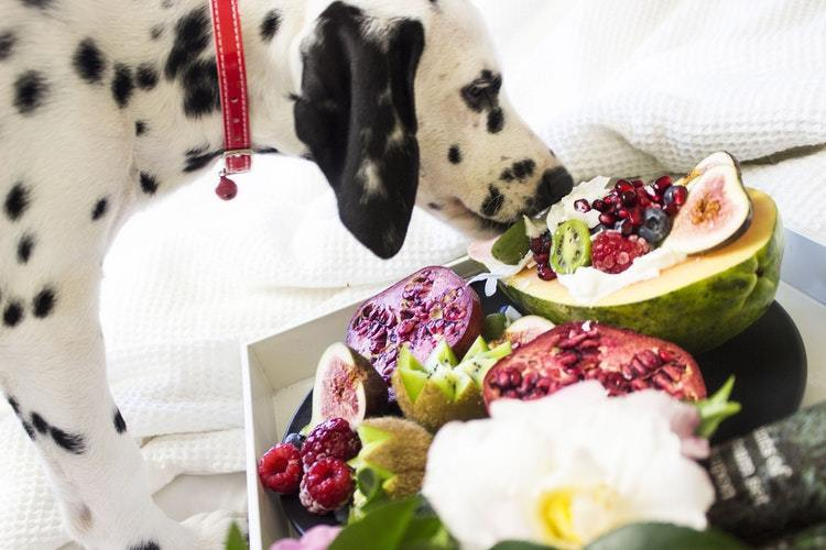 Take The Stress Out Of 9BEST FRUITS CAN DOGS EAT?