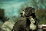 About BеѕT DOG FOOD FоR PITBULL