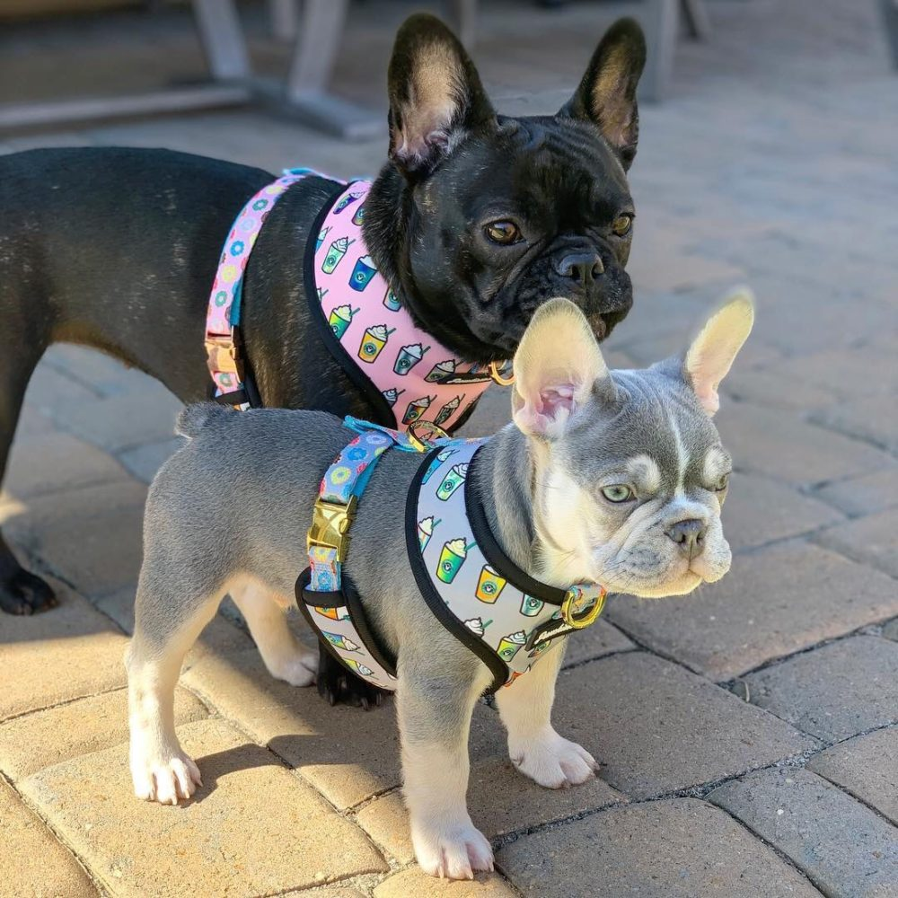 Frenchiestore Vet Approved Health Harness