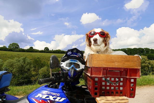 Is It Legal to Carry a Dog on a Motorcycle?